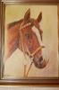 Pferde-Porträt