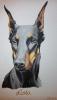 hunde_4